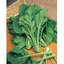 BLETTE verte à couper Liscia verde da taglio
