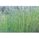 SEIGLE Fourrager (variété selon arrivage)