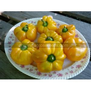 POIVRON Mandarine