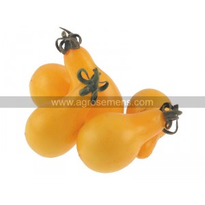 TOMATE Yellow Pearshaped (Qualité Premium)