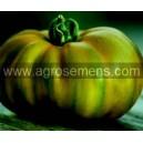 TOMATE Evergreen (Qualité Premium)