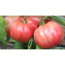 TOMATE Rosa (Qualité Premium)