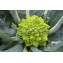 Graine bio Chou-Fleur Romanesco