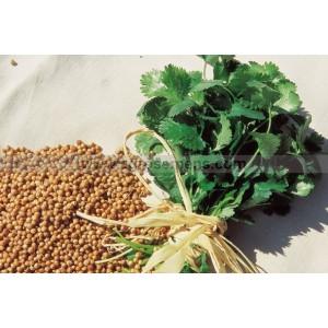 Guide plantes aromatiques bio 2017 montrouch organic - Graine de persil ...