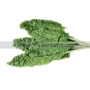 BLETTE verte à couper ou à tondre