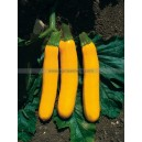Graine bio COURGETTE Gold Rush F1