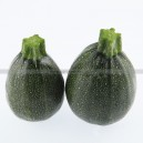 Graine bio COURGETTE Satellite F1
