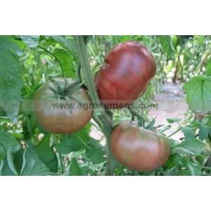 Agrosemens jardin graines graine semences semence bio - Tomate de crimee ...