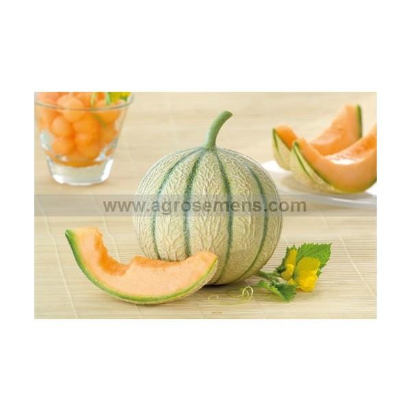 Melon charentais arisona hf1 agrosemens la semence au coeur du monde - Culture du melon charentais ...