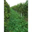 MELANGE Special Viticulture