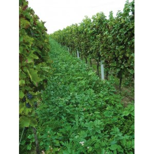 MELANGE Special Viticulture Vitivert 2 (sols normaux )