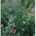 MELANGE Special Viticulture Vitivert1 (sols acides)