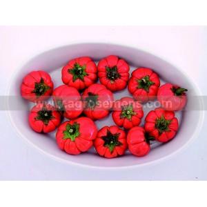 AUBERGINE rouge de Turquie