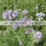phacelie Agrosemens