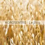 engrais verts bio - avoine - agrosemens