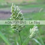 engrais verts bio - Dactyle - semences Agrosemens