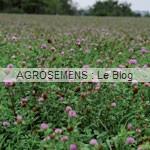 Marévert plein champ - agrosemens