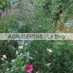 engrais vert viticulture - semences bio AGROSEMENS