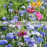 Mellifère abeilles - semence agrosemens