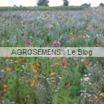 Marévert serres - semence agrosemens