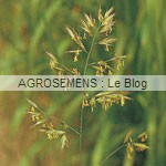 engrais verts bio - Fétuque élevée - Agrosemens