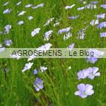 Lin Bleu - semence agrosemens