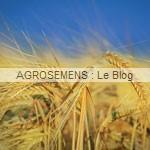 engrais verts bio - Seigle fourrager - Agrosemens