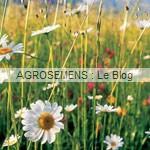 prairie - engrais vert- semence agrosemens