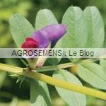 vesce-de-printemps - agrosemens