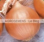 Oignon bio agrosemens