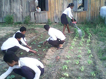 plantations semences bio agrosemens