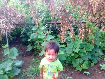 Les amis du pays Khmer - semences bio