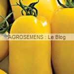 Banana leg - semences tomates bio - AGROSEMENS