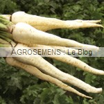 Panais bio semences agrosemens