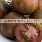 black Zebra - semences tomates bio - AGROSEMENS