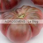calabash Rouge - semences tomates bio - AGROSEMENS
