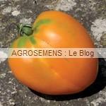 coeur Boeuf Orange - semences tomates bio - AGROSEMENS