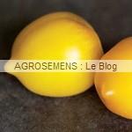 lemonTree - semences tomates bio - AGROSEMENS