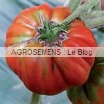 marmande - semences tomates bio - AGROSEMENS