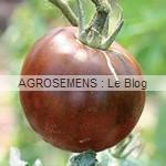 noire Russe - semences tomates bio - AGROSEMENS