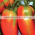 san Marzano - semences tomates bio - AGROSEMENS