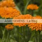 souci bio semences AGROSEMENS