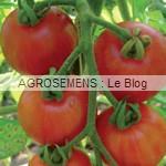 tomates bio semences bio agrosemens