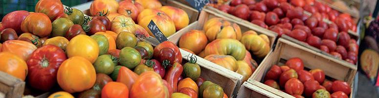 tomates bio - AGROSEMENS