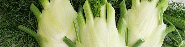 fenouil bio semences bio agrosemens