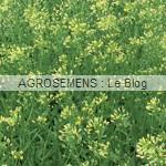 Cameline - semences bio engrais verts AGROSEMENS
