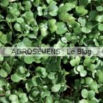 graines germées bio - semences maraîchères AGROSEMENS