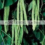 Vitalis haricot à rames bio - semences AGROSEMENS