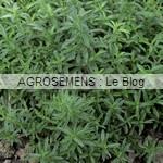 sarriette bio semences AGROSEMENS