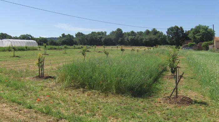ferme du Petit Sambuc à Aix en Provence AGROSEMENS